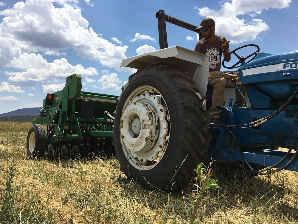 Mike using the No Till Drill from the High Desert Conservation District to seed a cover crop in the section we flail mowed a couple weeks ago.