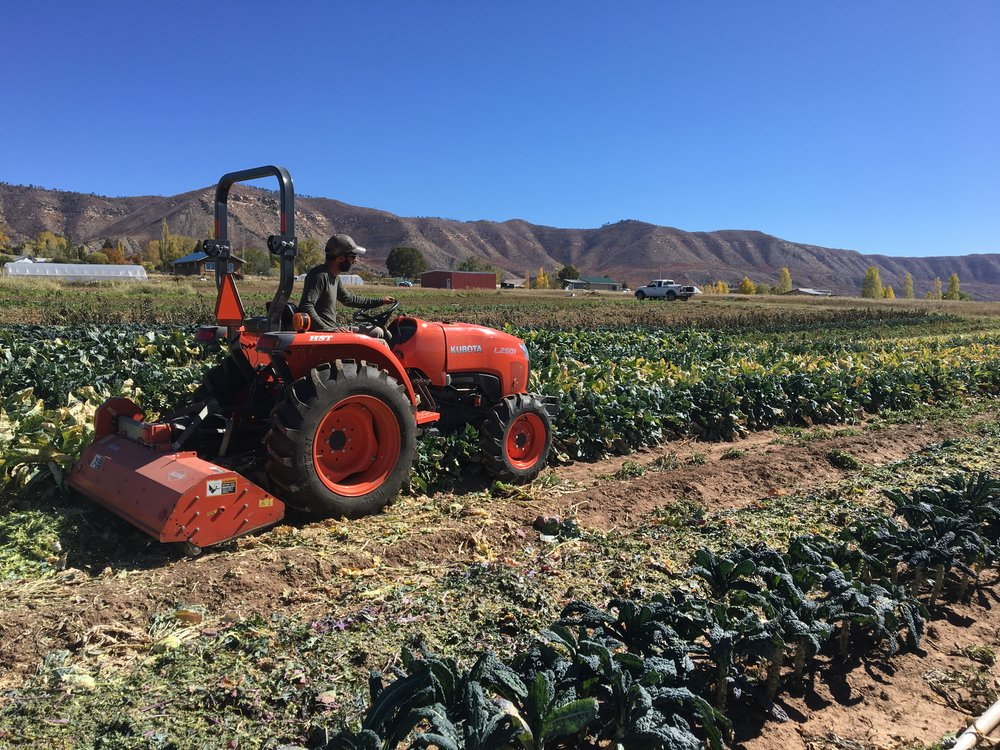 Flail mowing the brassica block with our neighbor's sweet equipment! Our neighbors are the BEST