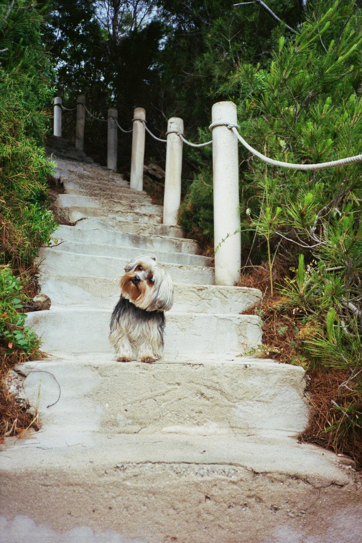 lil guy big steps - ibiza