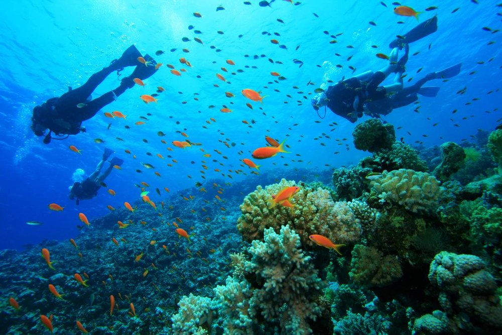 Ningaloo-Reef-Tauchen.jpg