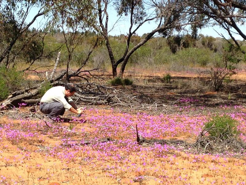 20150705123245_Outback Wildflowers.jpg