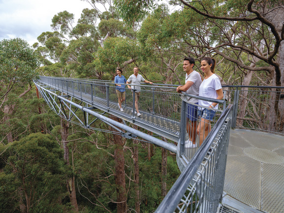 Tree Top Walk Albany.jpg