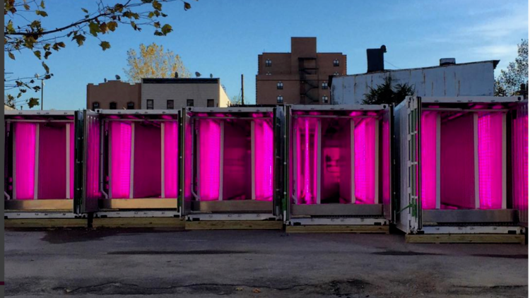 VERTICAL FARMING  ECO EDIT Nestled among Brooklyn's quaint brownstones and converted warehouses is a...