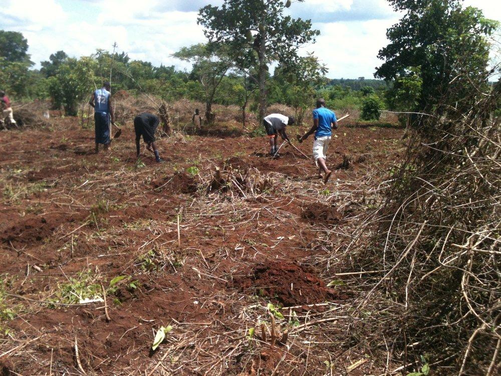 16a Farm clearing.JPG
