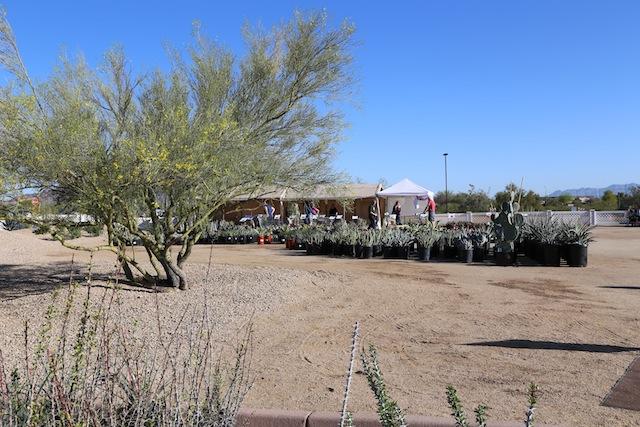 Phoenix Desert Botanical Garden Plant Sale