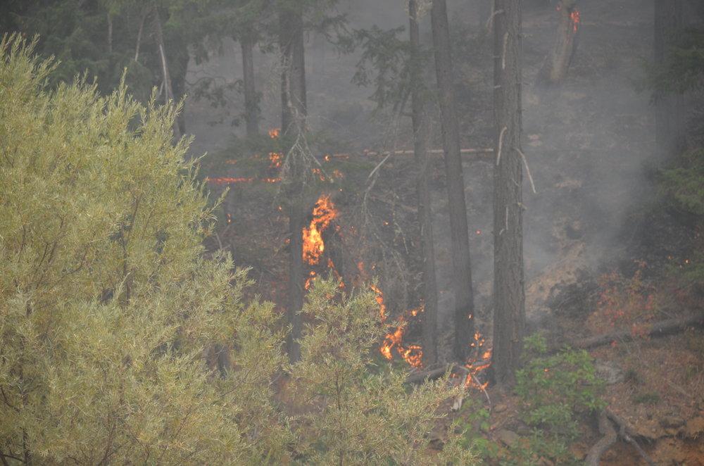 20160903 Gap Fire 102.JPG