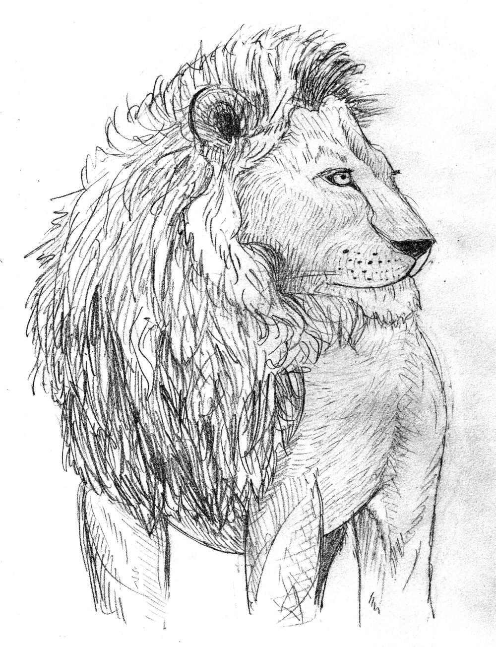 Lion sketch.jpg