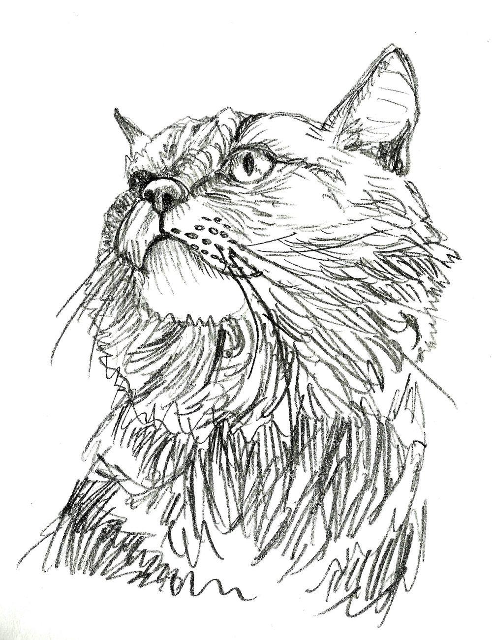 Lion cat sketch.jpg