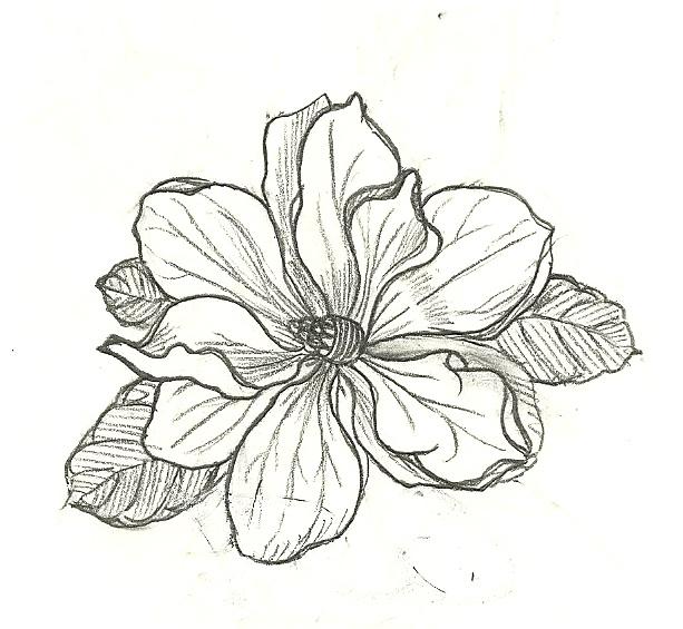 Magnolia Illuatration.jpg
