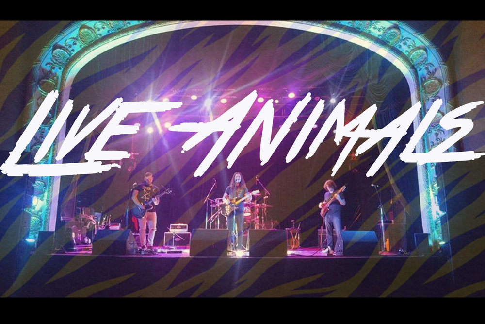 LIVE_ANIMALS-web.jpg