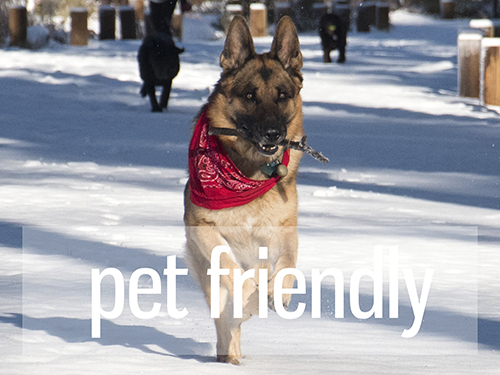 Click Here for Pet Friendly Vacation Rentals