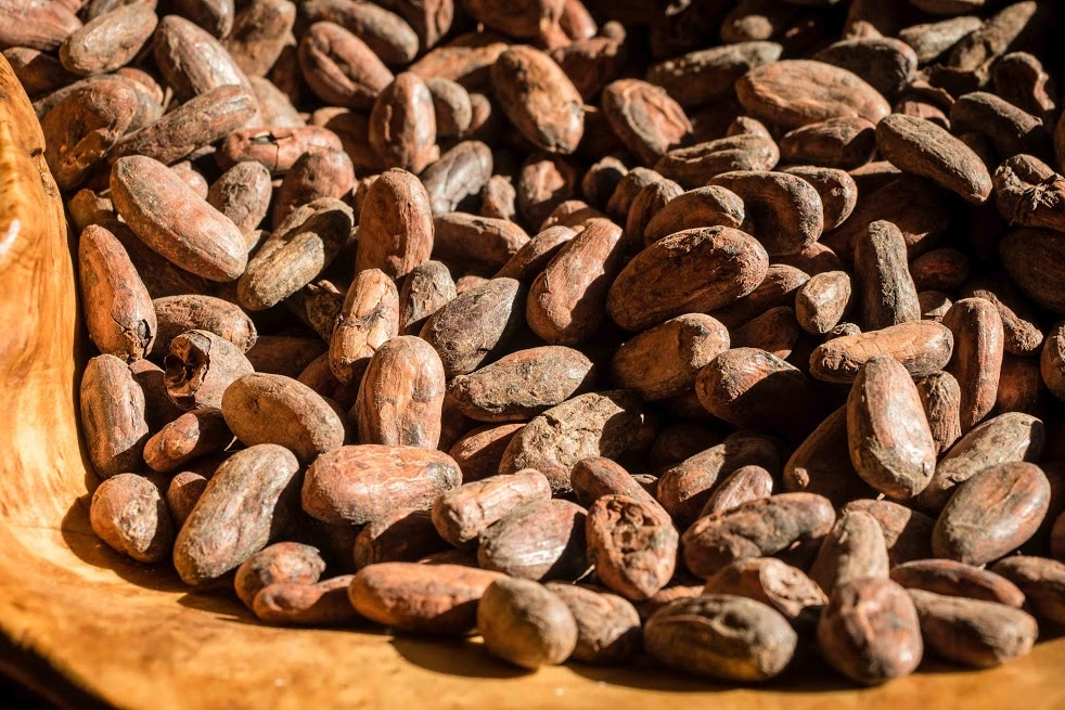 - COMING SOON -EXPLORING CACAO BEANSANDTHE MAKING OF CHOCOLATE -
