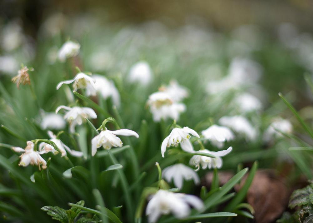 Ness-Gardens-Uk-Flowers-Day-1