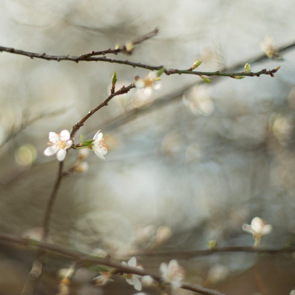 Day-3-Golden-Hour-Blossoms.jpg
