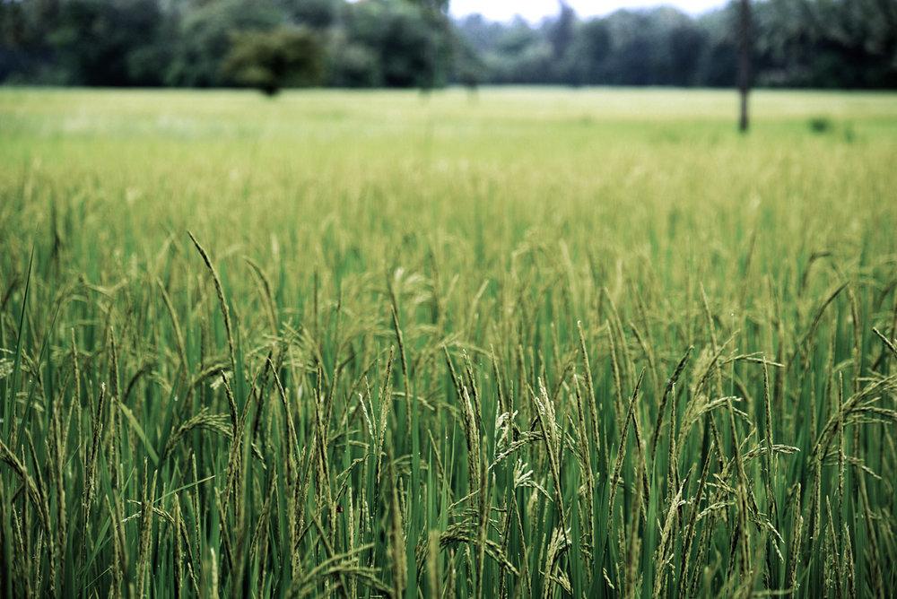 Firefly Villas 6.jpg