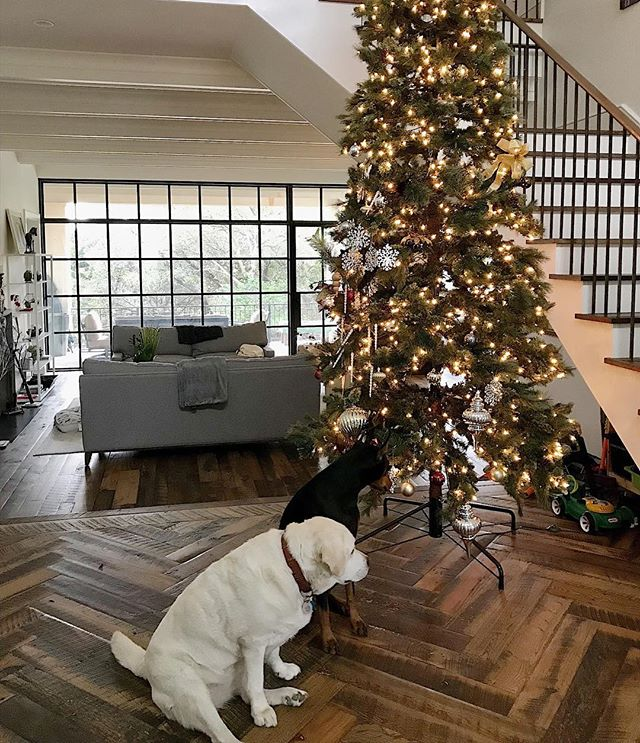 These doggies love their new home & their new Christmas tree . . . #interiors #remodel #interiordesign #beautifulhomes #austininteriordesigner #christmastree #christmas