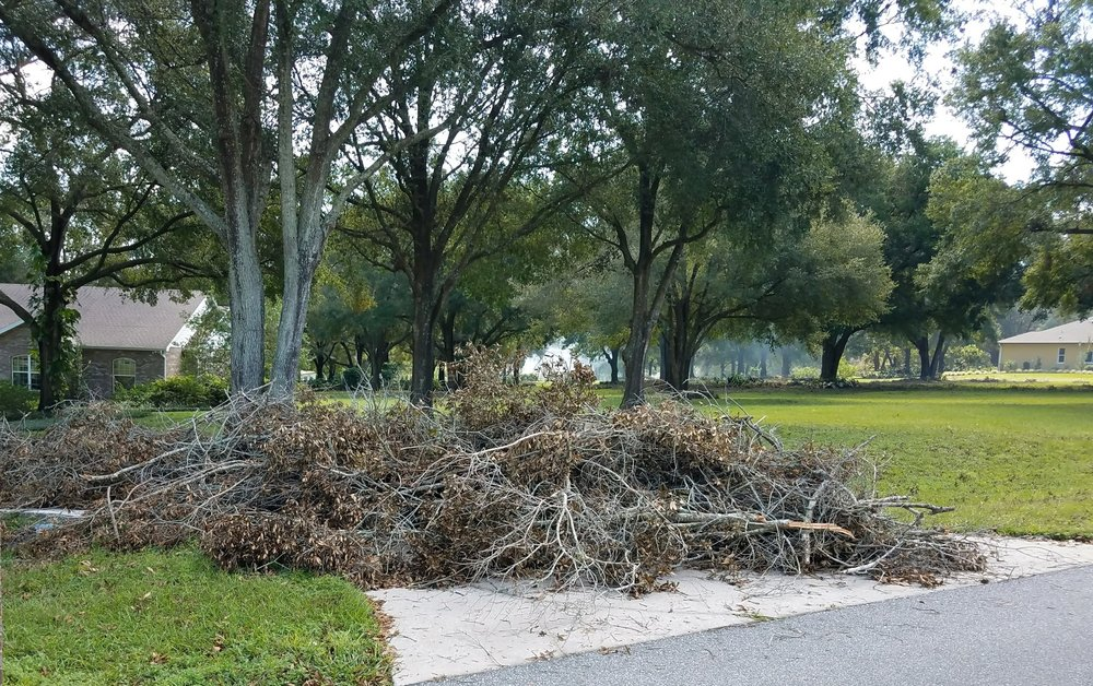 This is very normal... a HUGE pile of tree limbs.
