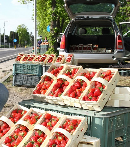 picture taken from google images - I don't know whose strawberries these are, but this is a typical site in Poland during the season. People pretty much part wherever they can and open their trunks or side doors and set out their berries and sell!