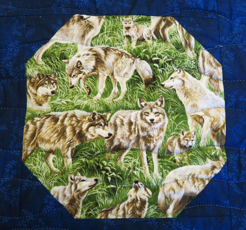 American Wildlife - Wolves