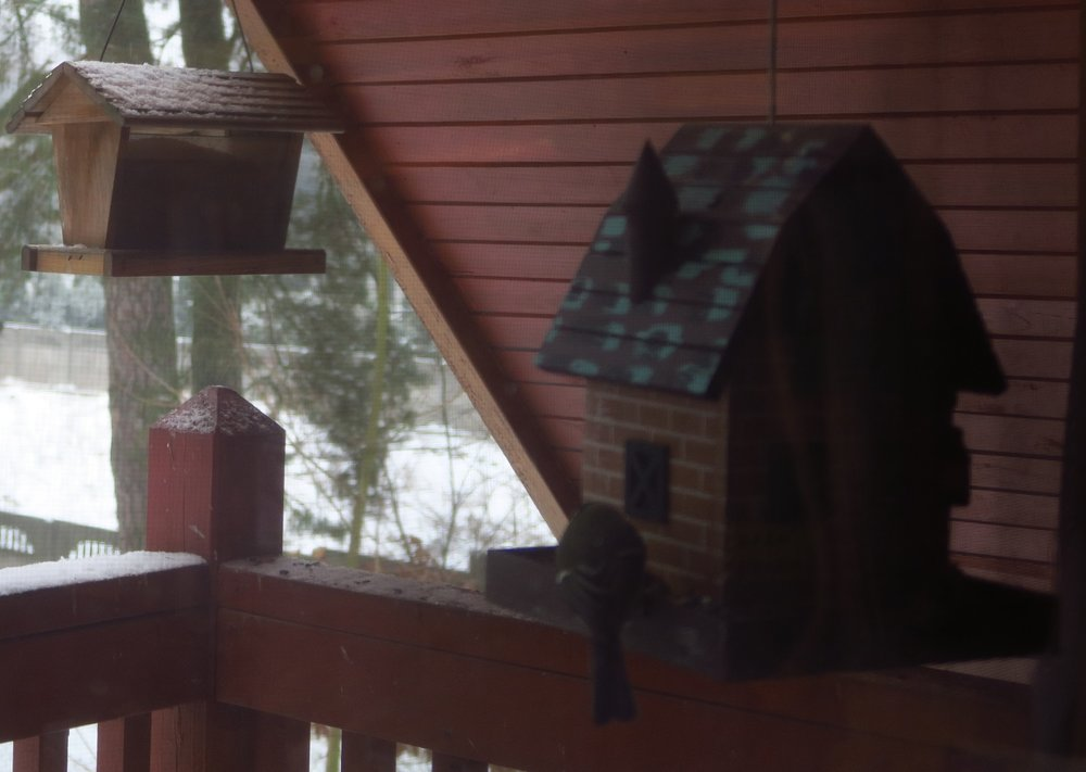 There's a screen on our window. It makes it hard to get a clear pic of the birds.