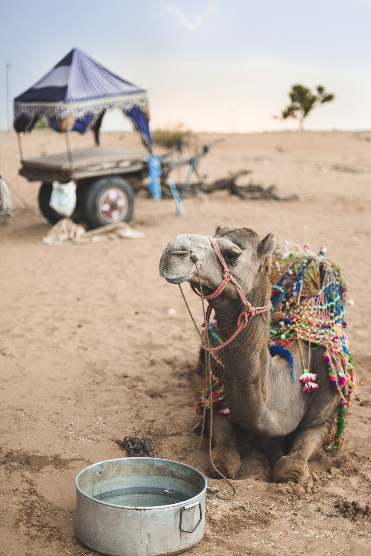 camel_1web.jpg