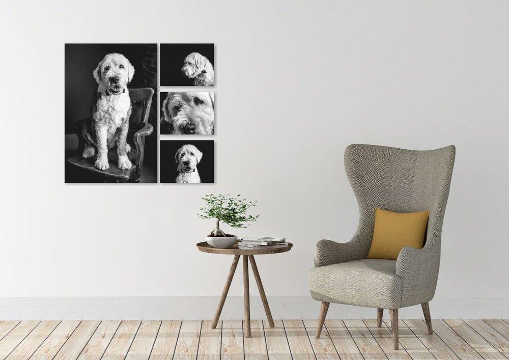 The wren canine.jpg