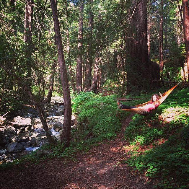 I love not man the less, but Nature more. -Lord Byron ✨🌲🏕🔥 #redwoods #bigsur #sleepunderthestars #workhardplayharder