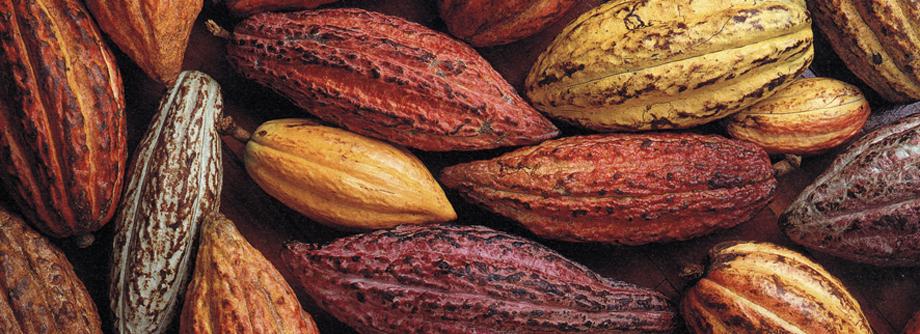Cocoa Nibs.