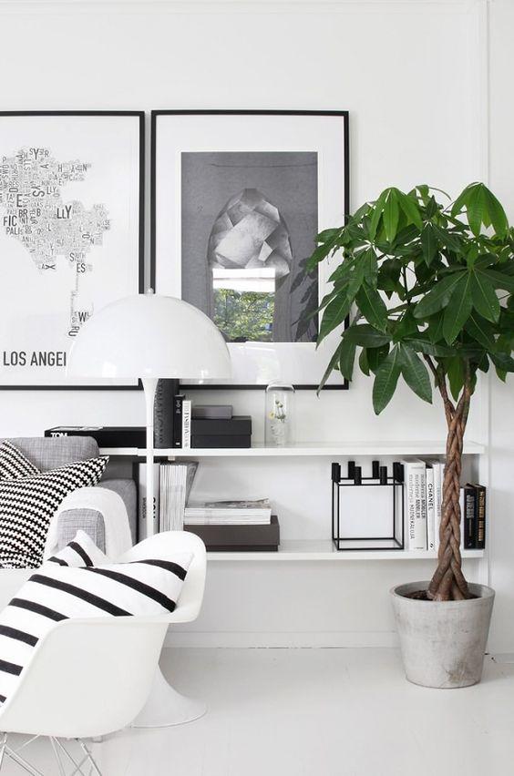 evde_bitki_yetiştirme