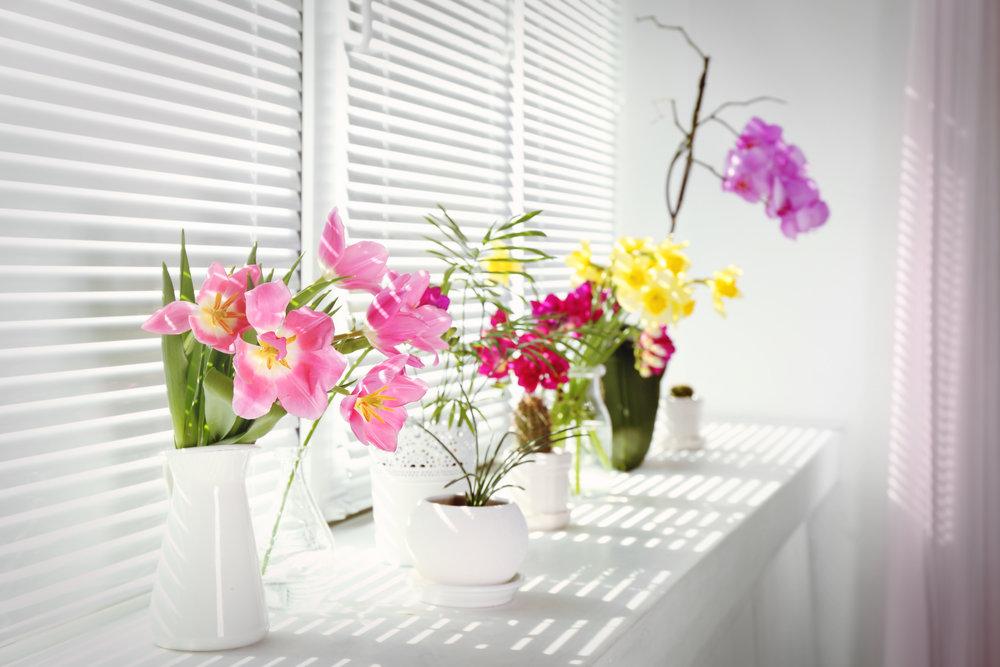 orkide_çiçek_dekorasyon