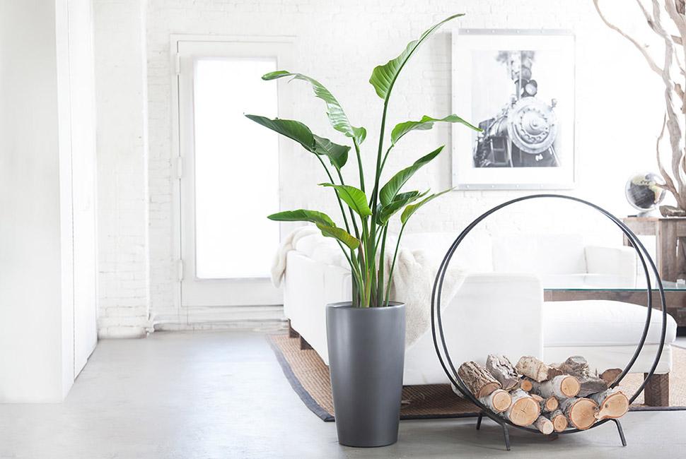 ev_bitkileri