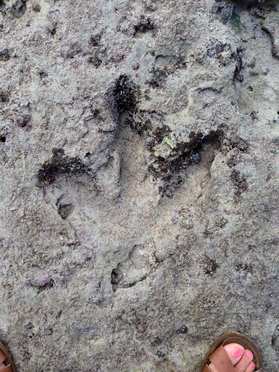 Dinosaur footprint at Gantheume Point
