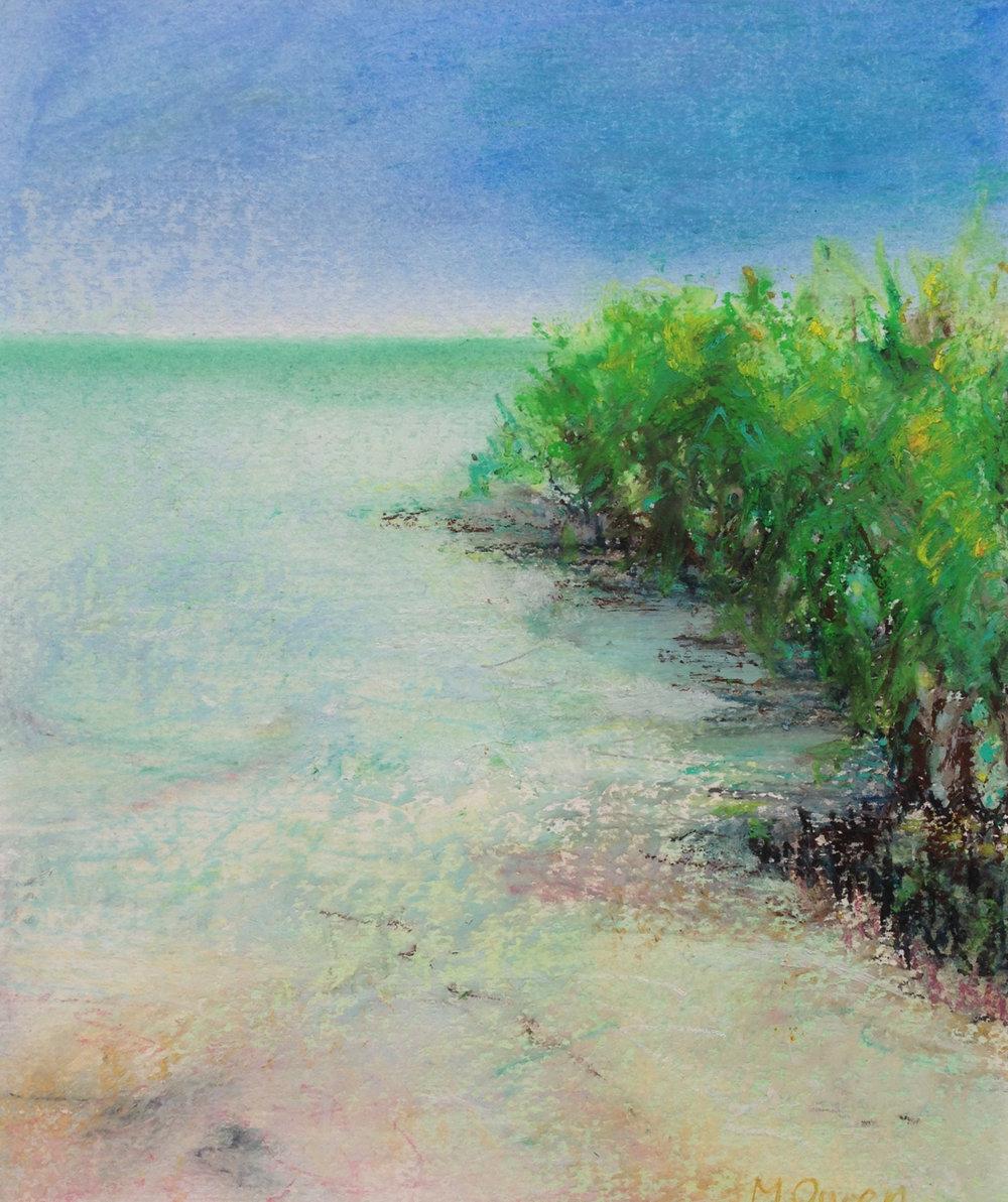 Mangroves at Roebuck Bay