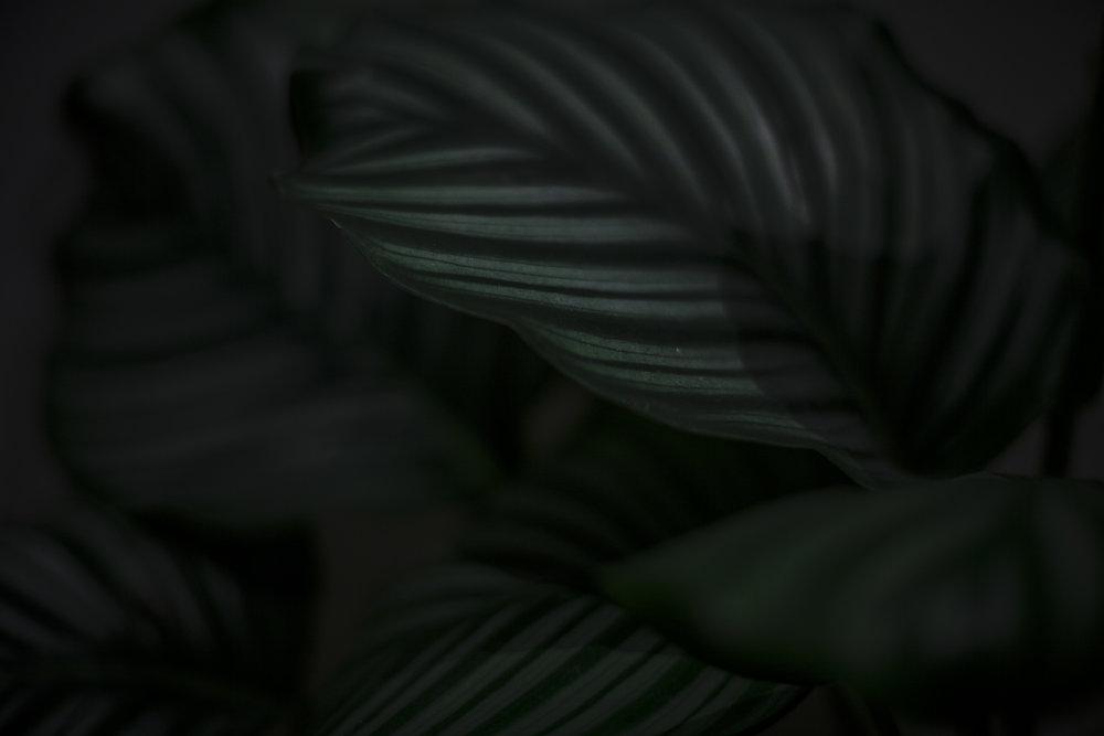 PlanteNov_SolveigBakken_021117_0018.jpg