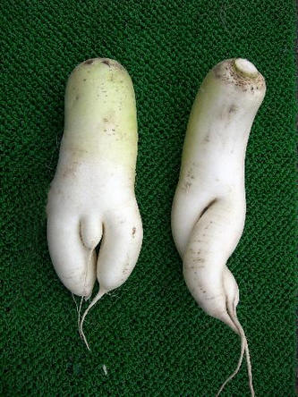 afrodisiacum voedsel 4.jpg