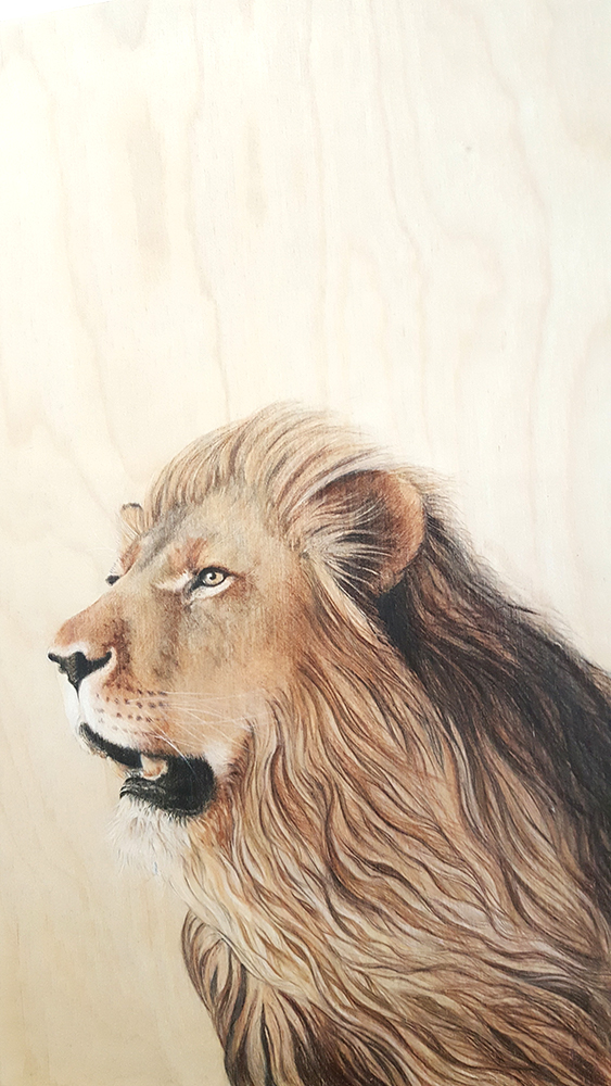 Asiatic Lion by Jacqueline Byrne