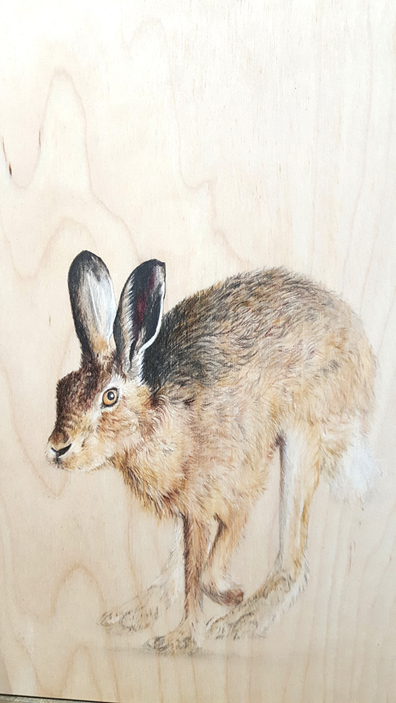 Hare Hopping by Jacqueline Byrne