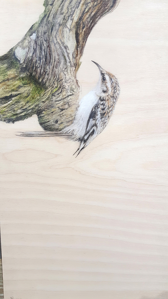 Tree Creeper by Jacqueline Byrne