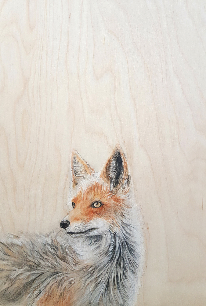 Mr Foxy by Jacqueline Byrne