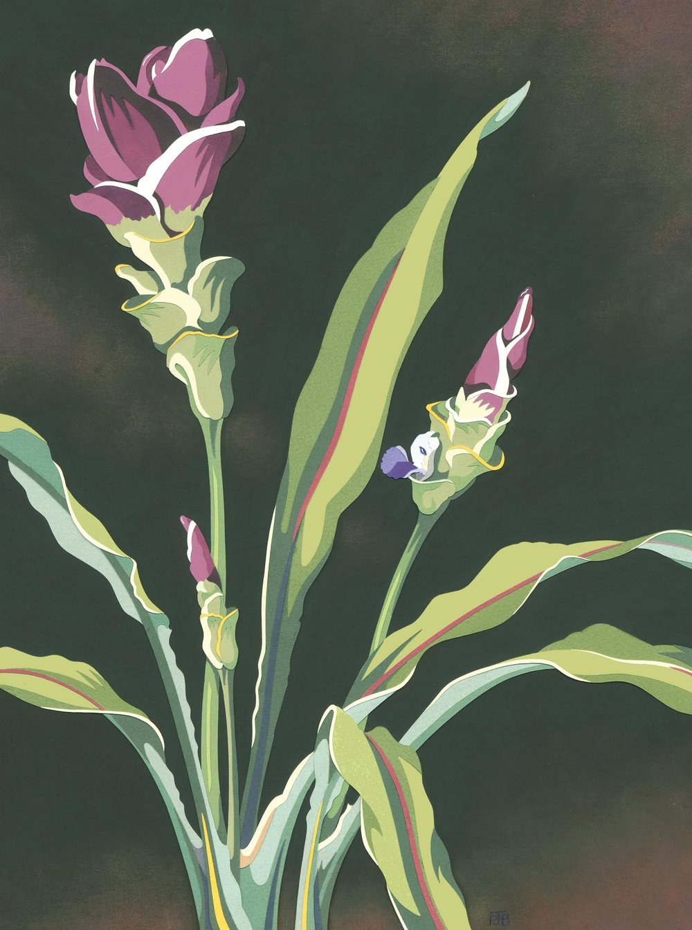 """Siam Tulip"". Collage by Penny Brown"