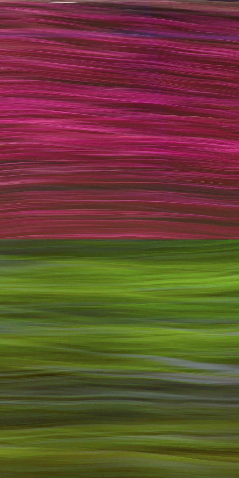 """""""Verde y Bougainvillea,"""" 2016. Ed 2/3"""