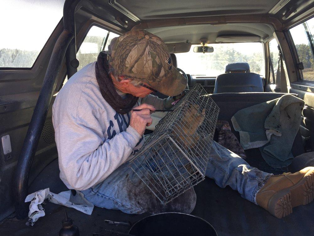 John checks a marked prairie dog for eartags.  ©MRR 2016