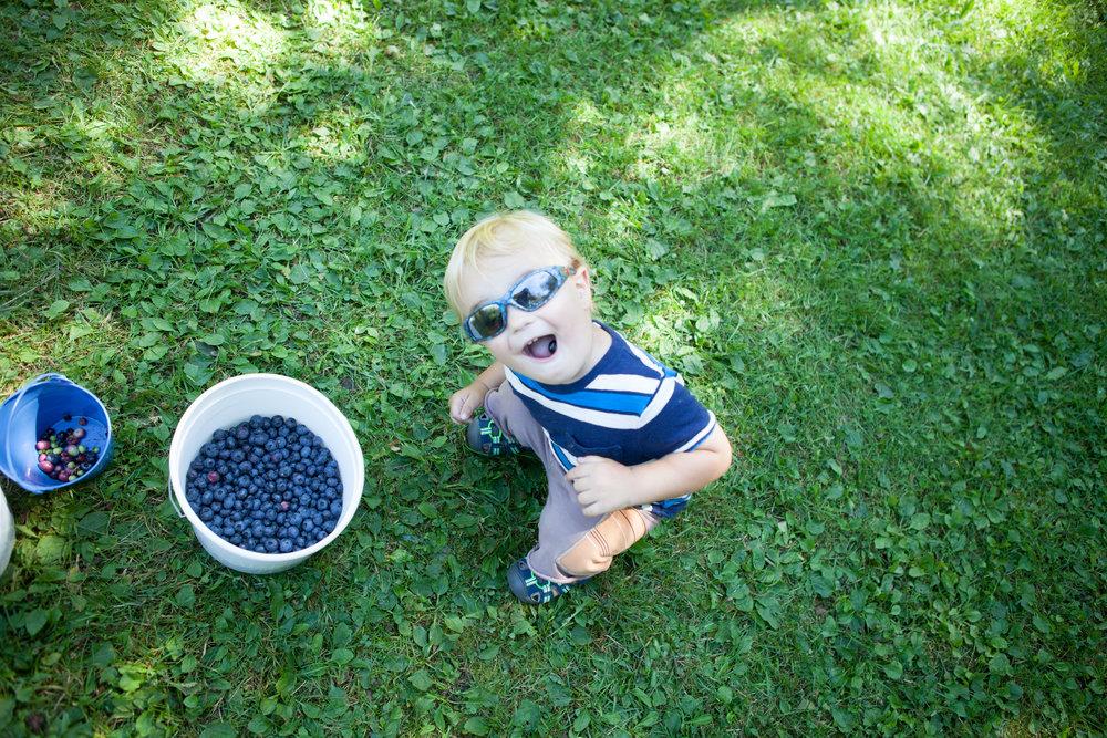 blueberrypicking2017-19.jpg