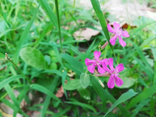 The wildflowers we planted in the labyrinth under the full moon this spring are finally blooming! . [image description: 3 photos of wildflowers with grass and labyrinth stones in the background. the first is purple, the second is pink, and the third is yellow and maroon] . #wildflowers #savethebees #retreatcenter #labyrinth #growth