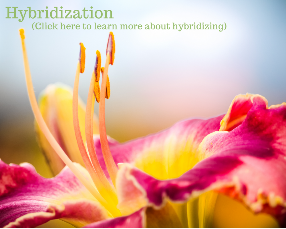 What is hybridization_.png
