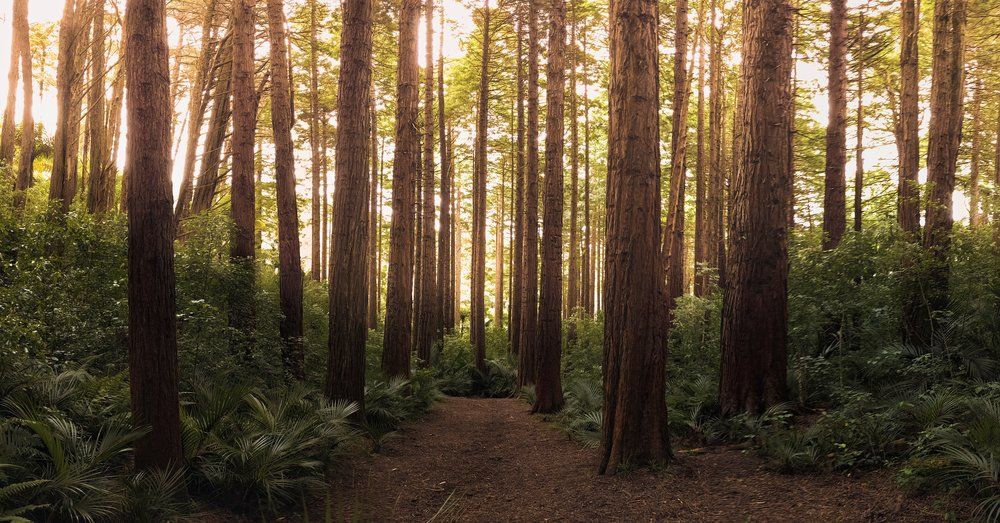 conifer-daylight-environment-572688.jpg