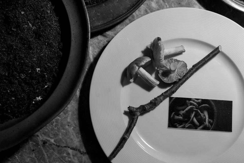 COCO, YOKO & BELL_DINNER 1_73.jpg
