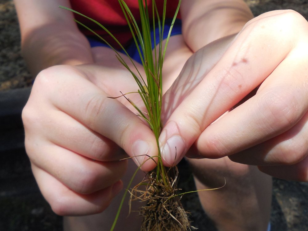 "School Programs - ""Every blade of grass has its angel that bends over it and whispers, 'Grow, grow'. "" —The Talmud"
