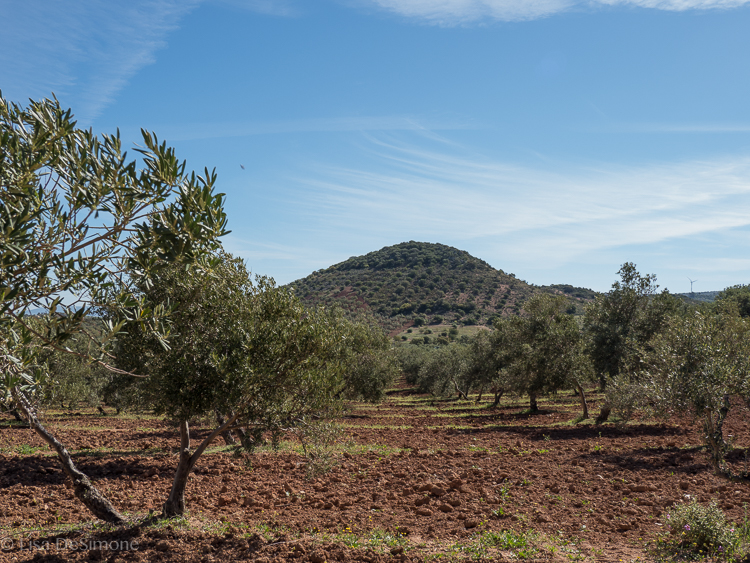 Olive groves in Andalusia, Spain