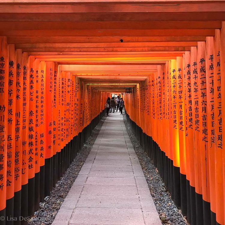Fushimi Inari Shrine is an important Shinto shrine, just a few train stops from Kyoto. Most famous for it's thousands of bright orange torii gates, walking the path is hugely popular with locals and tourists.